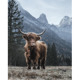 Highland Cow Mini Poster