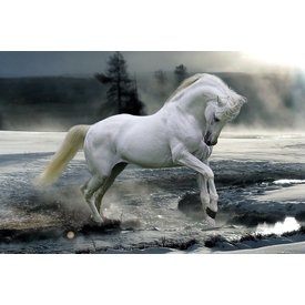 Bob Langrish Horse Snow Maxi Poster