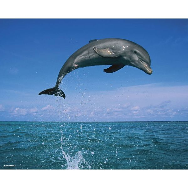 Dolphin Leaping - Mini Poster