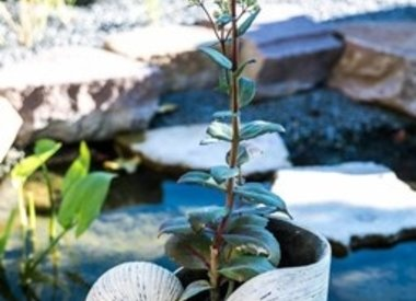 Übertöpfe, Pflanztöpfe, Vasen