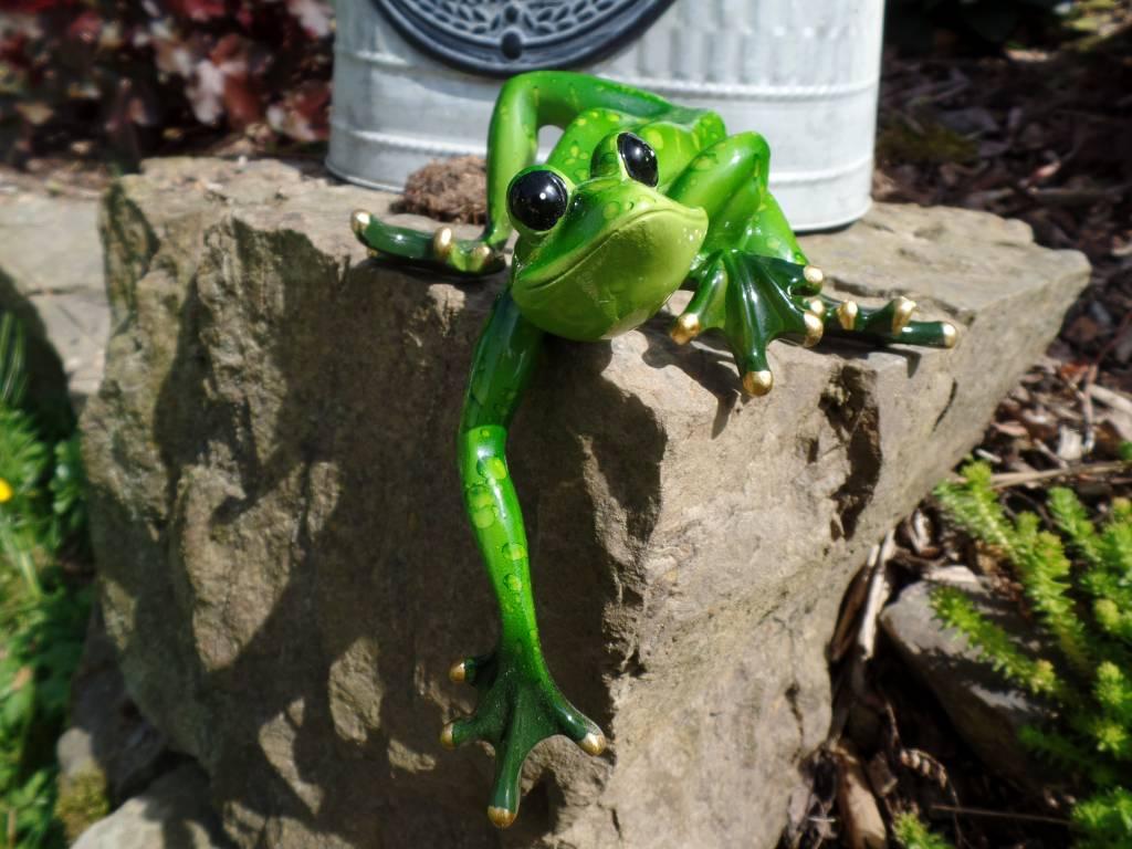 Frosch Kantenkletterer