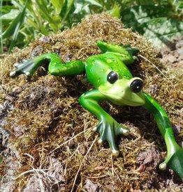 Zierlicher Frosch ,klein, liegend