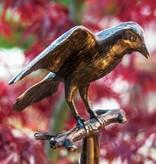 Vogel Flügel offen auf Ast sitzend