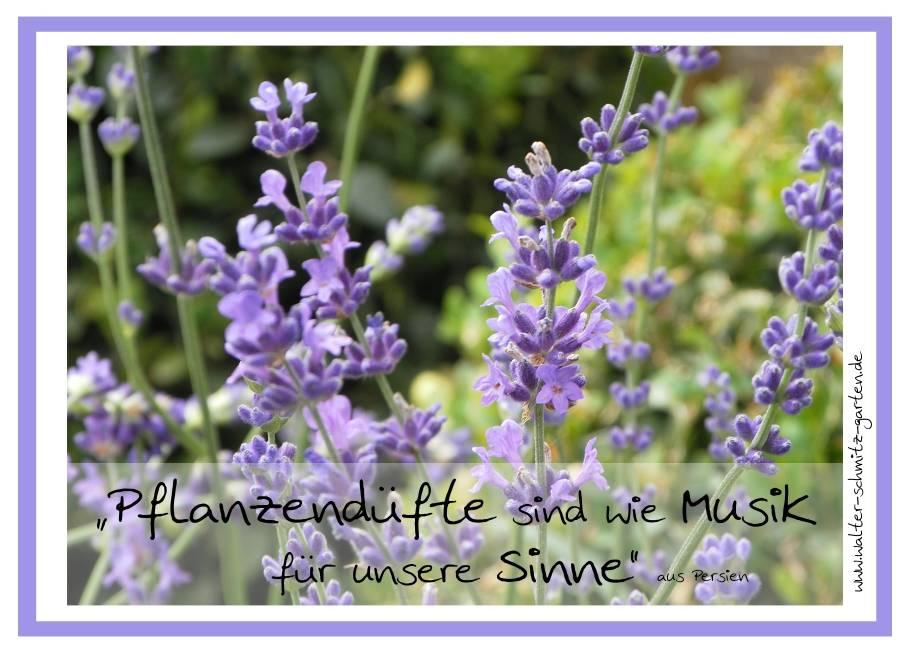 """Postkarte """"Pflanzendüfte sind wie Musik für unere Sinne"""""""