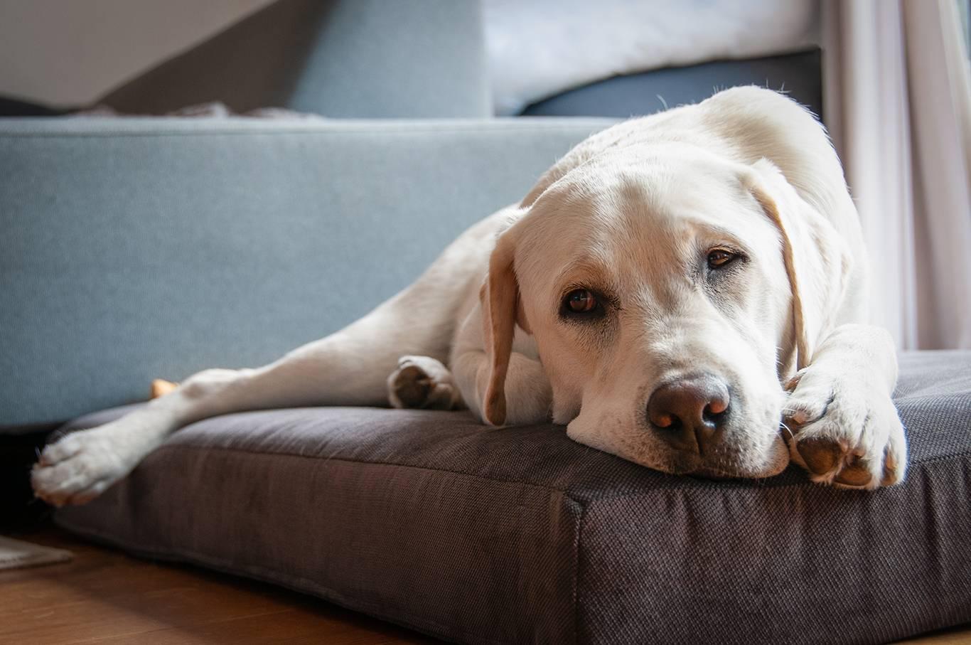 MediDog orthopedisch <br> hondenkussen
