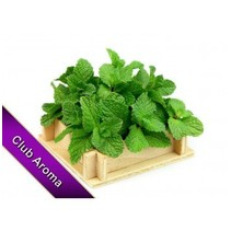 AROMA SPEAR MINT