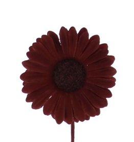 Flower Germini  brown