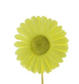 Flower Germini  lemon