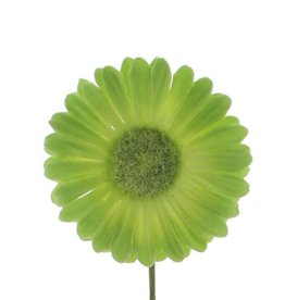 Flor Germini verde claro