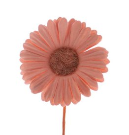 Blume Germini  Salm