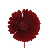 Flower Germini - 65mm - red - 96 pieces