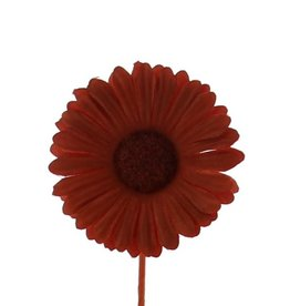 Blume Germini  Terra Cotta