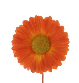 Flower Germini  orange