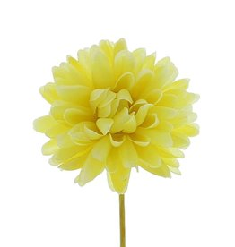 Dahlia - light yellow