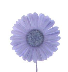 Blume Germini  Lavendel