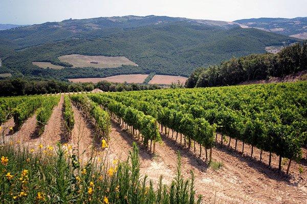"""Gort over de Grens """"Op bezoek bij Mastrojanni"""" Brunello di Montalcino"""