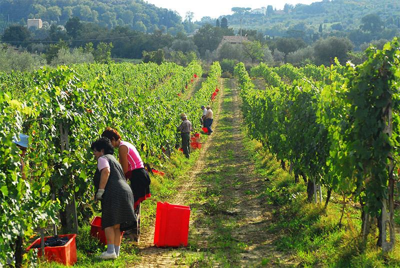 Kies de beste Italiaanse wijn met onze eenvoudige Italiaanse Wijnwijzer