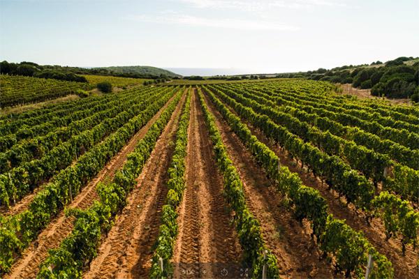 Wijngaarden Cantina Mesa