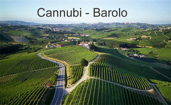 Cannubi wijngaarden