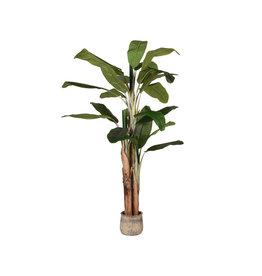 Kunstplant Musa 110x110x180 cm - Groen - Kunststof