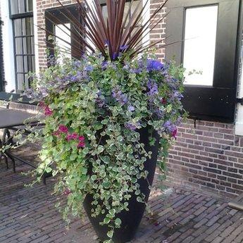 CANNA polyester 50x59 cm ronde plantenbak