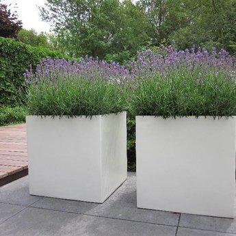 Buxus polyester 120x120x80 cm plantenbak