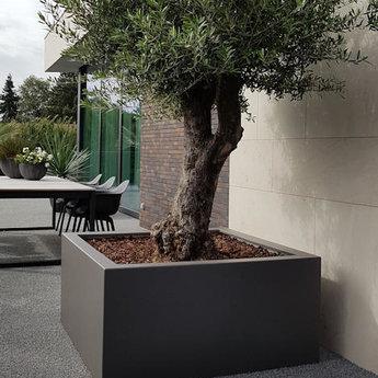Buxus polyester 200x200x60 cm plantenbak