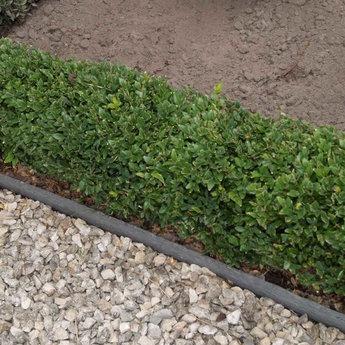 ECO-oh Ecolat GRIJS recht 14 cm x 10 mm, lengte 3 m.