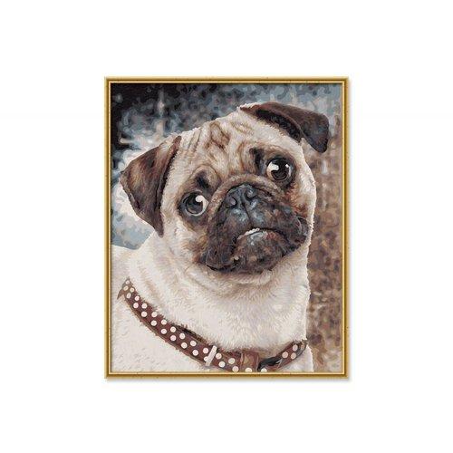 Schipper Pug Puppy