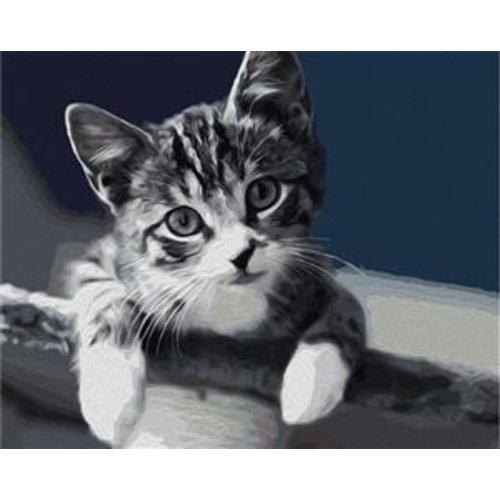Artventura Kitten
