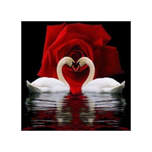 Artibalta swan devotion