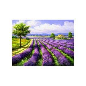 Artibalta Lavendel Veld