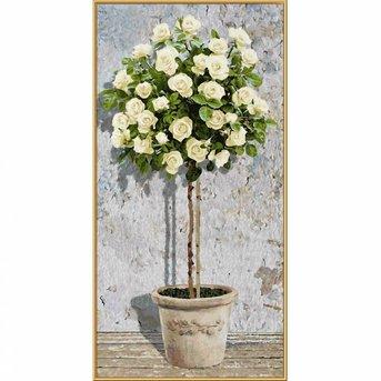 Witte Rozenboom