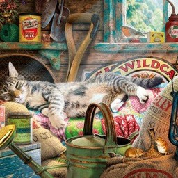 Gibsons Snoozing in the Shed - Steve Read