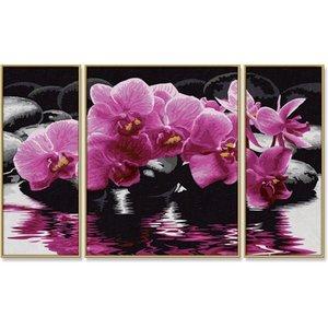 Schipper Orchideeën