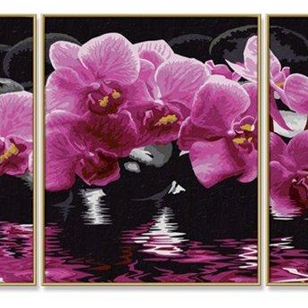 Schipper Orchids