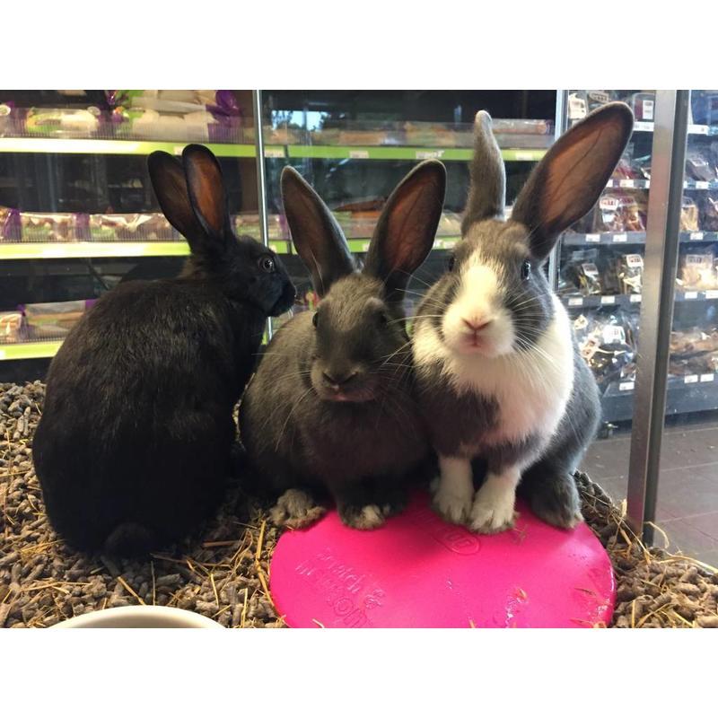 Scratch & Newton Ice Pod voor konijnen en knaagdieren
