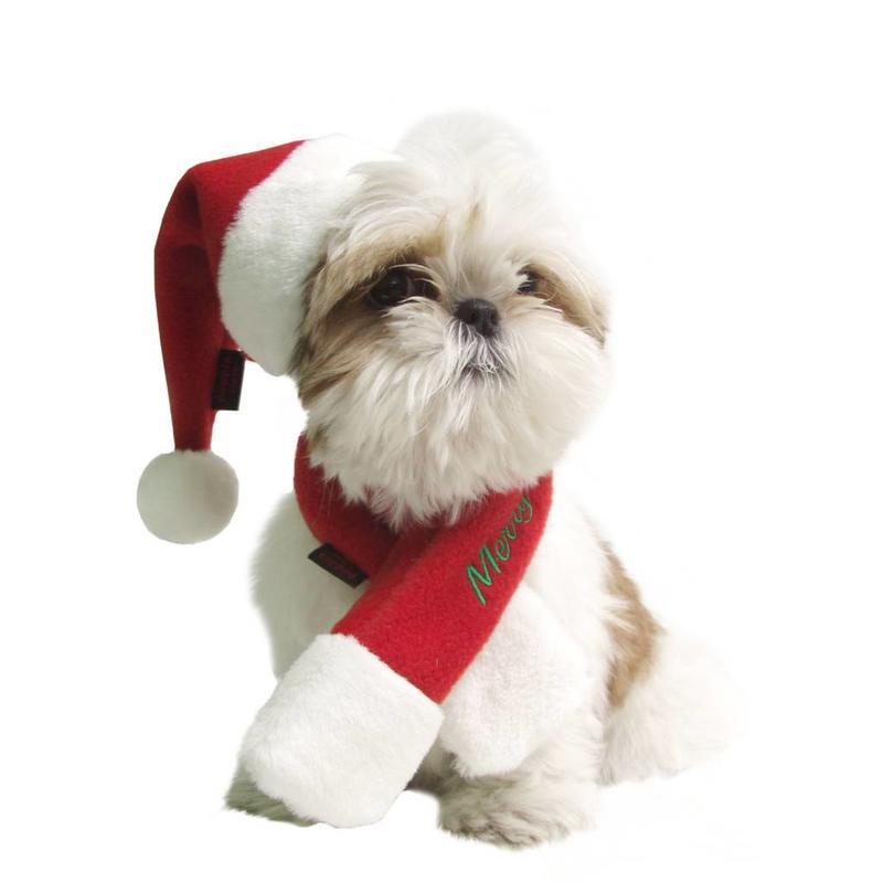 Honden-kerstmuts
