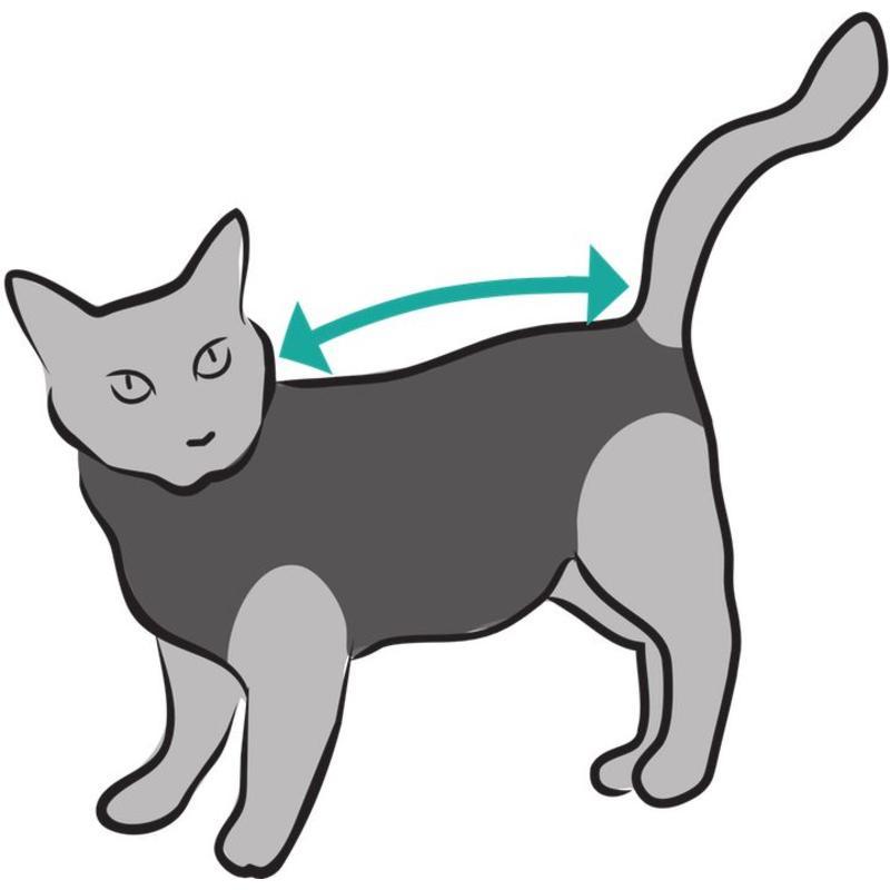 Beschermend shirt bij wonden en plekken voor katten