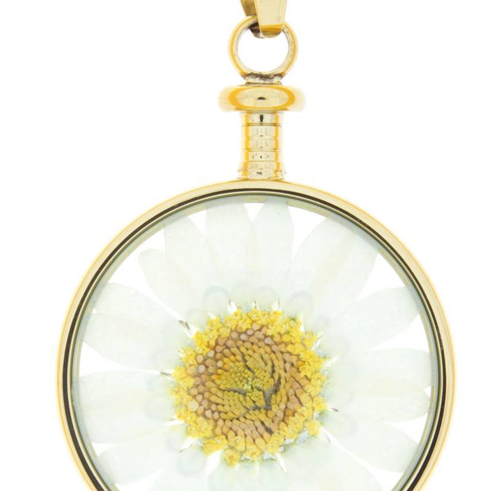 blumenkind® Anhänger gold, Blume weiß I blumenkind® I echte Blüte