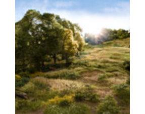 Field System / Statische Gräser /  Untergrund / Rasen / Boden / Turf