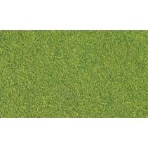 Rasenmischung  - Grün (Streuer)