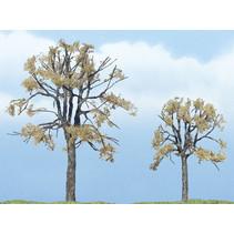 Premiumbäume - Tote Ulme