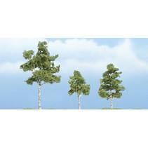 Premiumbäume Papierbirke