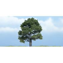 Premiumbäume Eiche