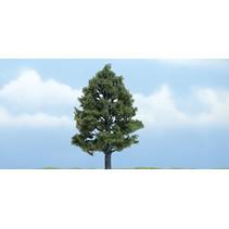 Premiumbäume Amerikanischer  Amberbaum