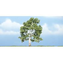 Premiumbäume Sycamore II
