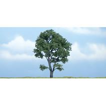Premiumbäume Ahorn