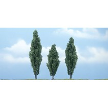 Premiumbäume Pappel