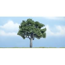Premiumbäume Nussbaum